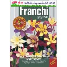 Aquilegia multicolor bustina semi fiori per vaso giardino e aiuole