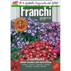 Cineraria ibrida multicolor bustina semi fiori giardino vaso aiuole