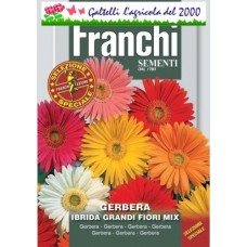 Gerbera ibrida grandi fiori mix bustina semi speciale