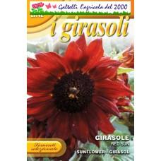 Girasole red sun