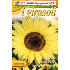 Girasole Lemon Leopold giallo